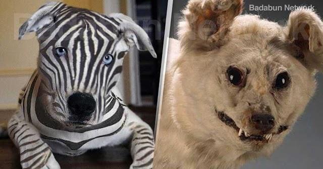 perros extinguir raza hombre tierra planeta