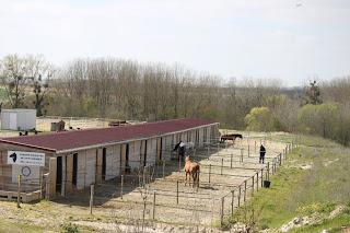 Le paddock individuel, un bon moyen pour que votre cheval prenne l'air (mais qui ne doit pas remplacer de vraies sorties !).