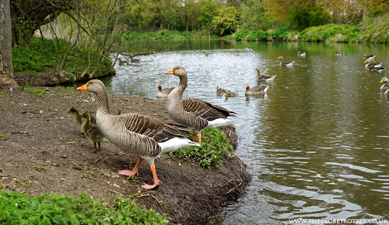 Wildlife at River Lee Country Park