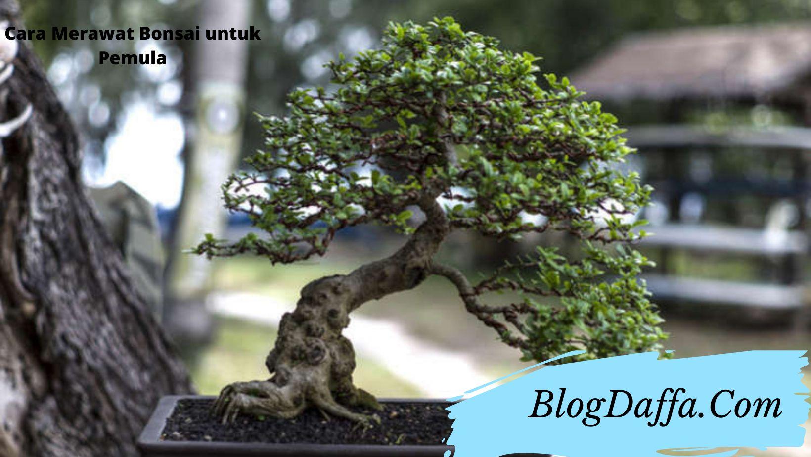 Cara merawat bonsai bagi pemula