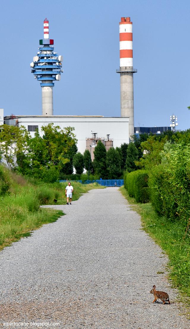 Lepri nei parchi a Milano