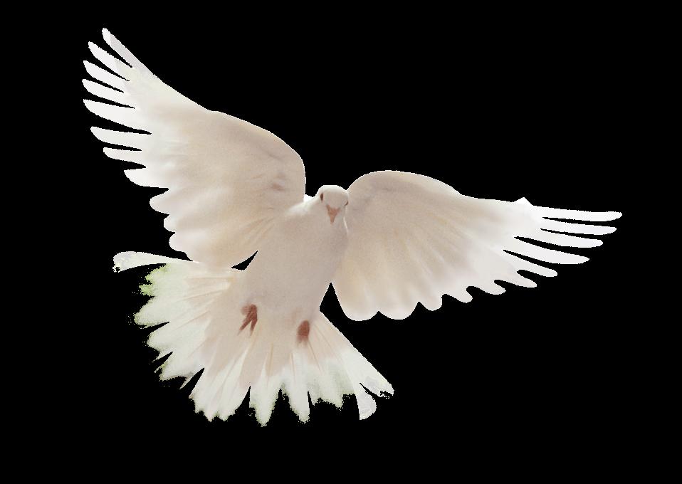 Gifs Y Fondos Galilea: Espíritu Santo