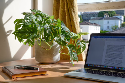 Work from home by a window with a plant next to laptop
