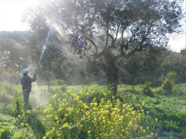 Η δράση της ψεκασμένης γύρης απέναντι στην μέλισσα