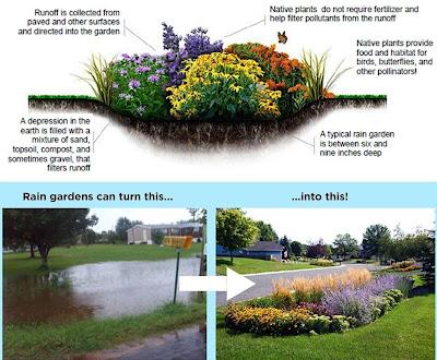 Cara Mudah Membuat Taman Hujan (Rain Garden)