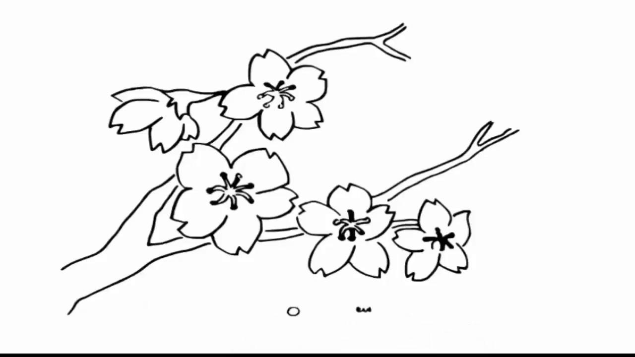 Mewarnai Bunga Sakura Collection Images