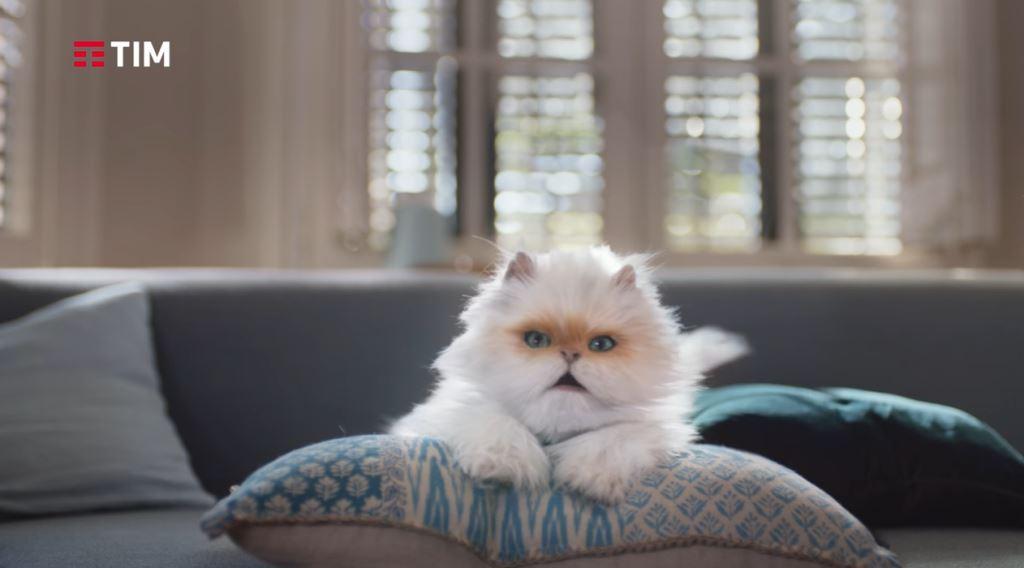 Quel Gatto di TIM Smart, che razza è? Info e foto spot Smart 4 in 1