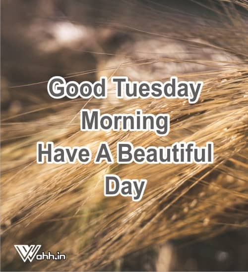 Good-Morning-Tuesday-Wishes