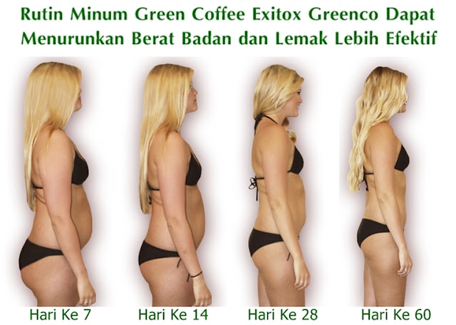 Green Coffee Exitox Greenco Dapat Menurunkan Berat Badan dan Lemak Secara Cepat dan Efektif