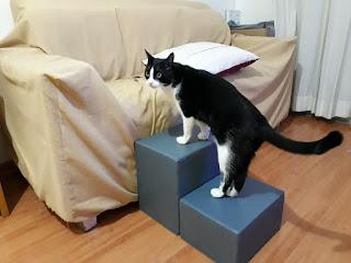 escadas para gatos em sofás