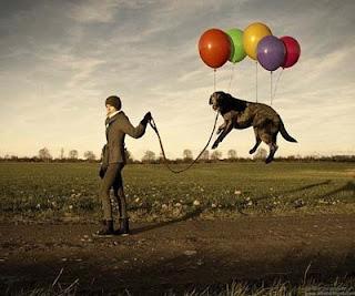 εκπαιδευση βόλτα σκύλου χωρίς να τραβάει.