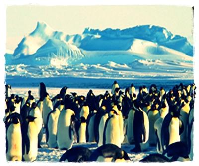 12 Ciri-Ciri Penguin