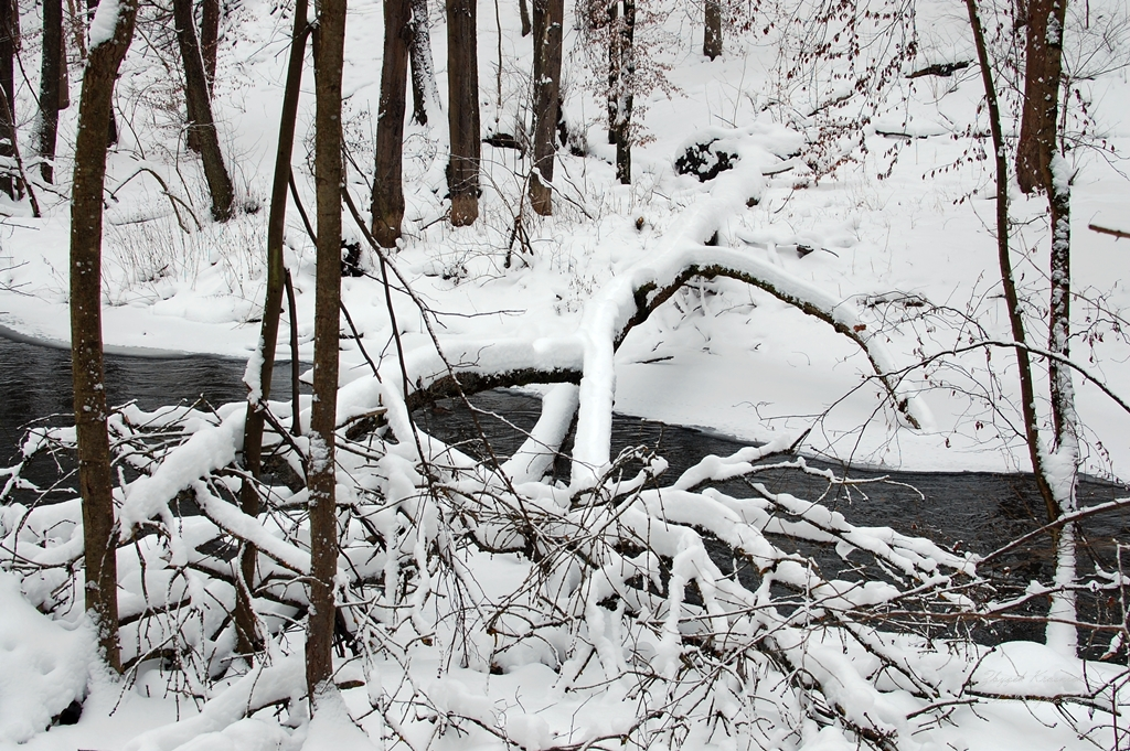 Olsztyn   Las Miejski i rzeka Łyna