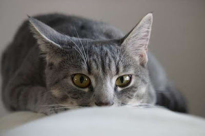 Symptoms of Cat Poisoning Every Owner Should Know Symptoms of Cat Poisoning Every Owner Should Know