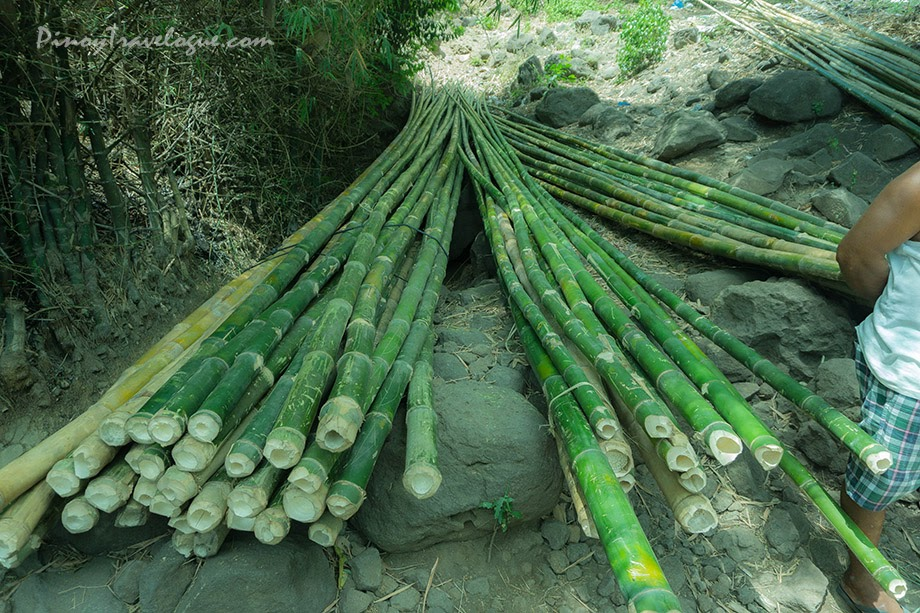 Harvested bamboo woods