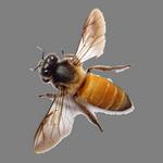 bee in spanish