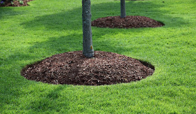 what to do when grass won't grow under trees,trees and grass,tree and grass,how to get grass to grow under trees,growing grass in shade under trees,grass that grows under trees,grass that grows in shade under trees,grass seed for under trees,best grass for under trees