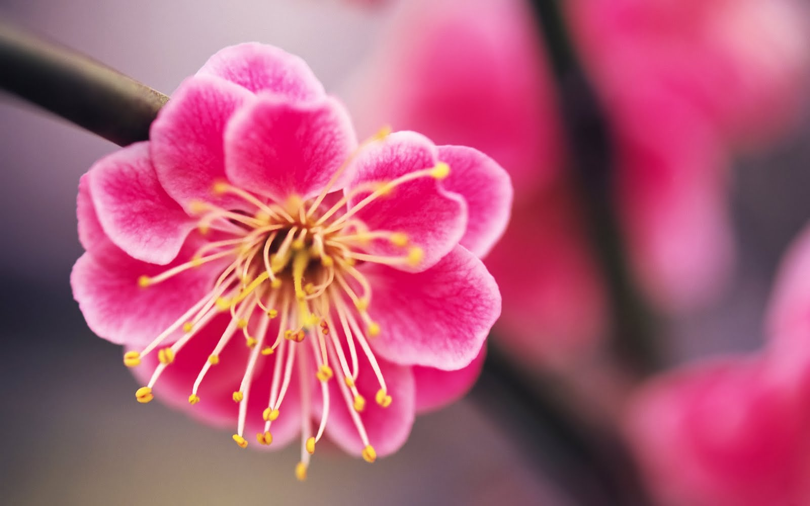 Most Beautiful Things in the World: Most Beautiful Pink ...