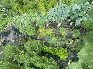 Aerial View of Cabbage and Peppers