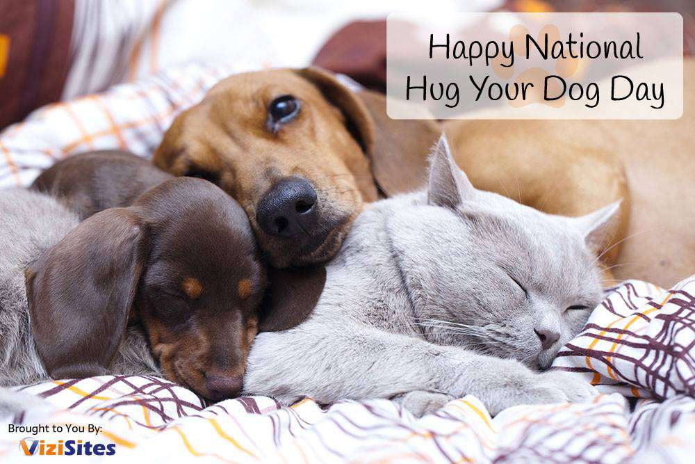 National Hug Your Dog Day Wishes Pics