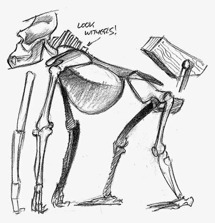 Gorilla muscle anatomy