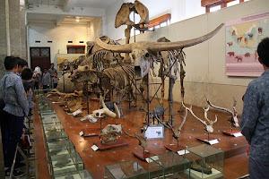 Museum Geologi Bandung