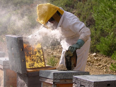 QUE ES LA APICULTURA??? - WHAT IS THE BEEKEEPING ???