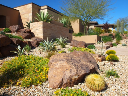 Decorating yard with a variety of desert plants for Home landscape planting design and management