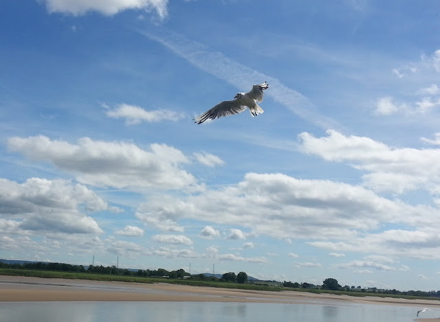 Seagull in flight over estuary
