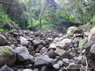Cerro Viejo -  Afluente de arroyo 04