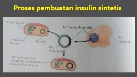 proses pembuatan insulin sintetis dengan teknik DNA rekombinan
