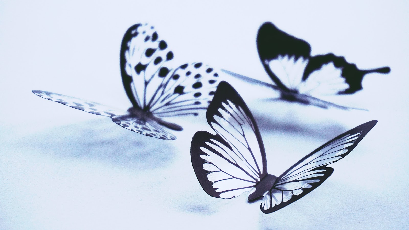 butterflies-pictures