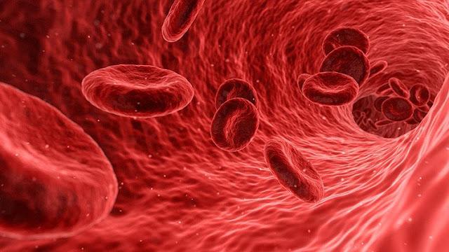 Los ratones fueron modificados para producir plaquetas fosforescentes