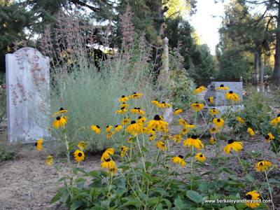 yellow flowers amid the graves at Pine Grove Cemetery in Nevada City, California