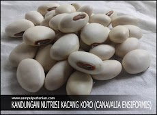 Kandungan Kacang Koro (Canavalia ensiformis)