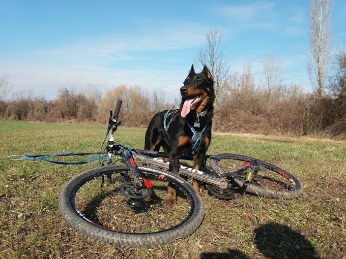 Elesett egy nő kerékpárjával Csabán, mert kifutott elé egy kutya