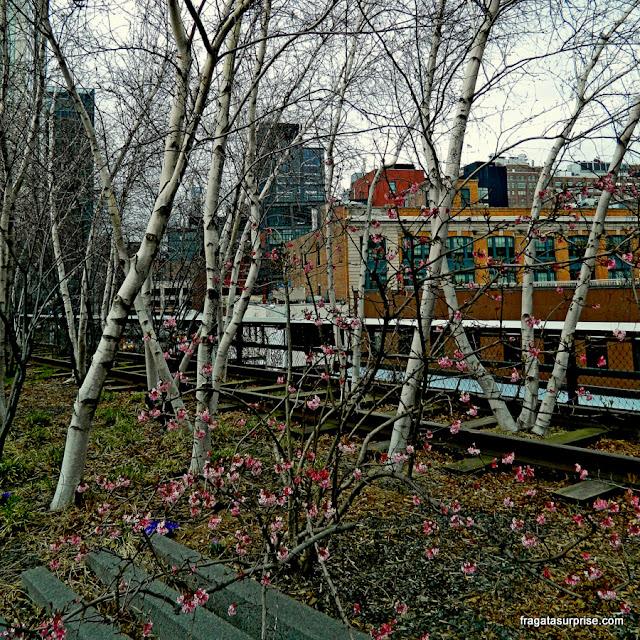 Vegetação de outono no parque High Line, Nova York
