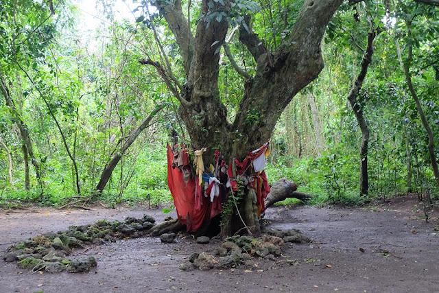 Petilasan Hutan Nepa