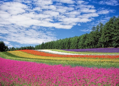 다채로운 꽃밭 사진