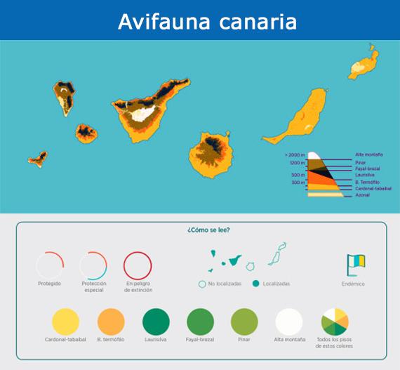 Avifauna Canaria
