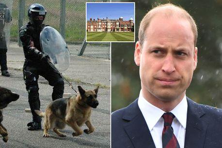 Prince William 'cornered by snarling dog after being mistaken for intruder'