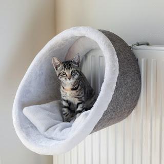 A macska fekhelynek kényelmesnek kell lennie.
