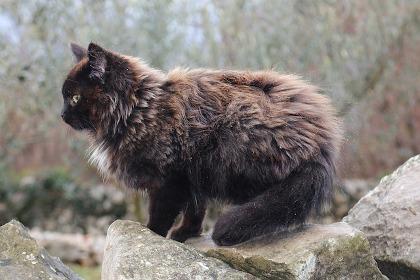 Gato negro sobre roca en la naturaleza.