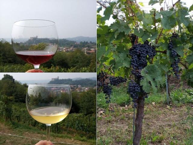 degustazione vini cascina piano angera