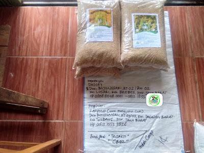 Benih pesana    DASORI Brebes, Jateng.   (Sebelum Packing)