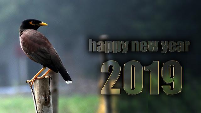 happy new year 2019 in advance whatsapp status