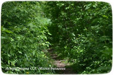 тропинка, зеленый цвет