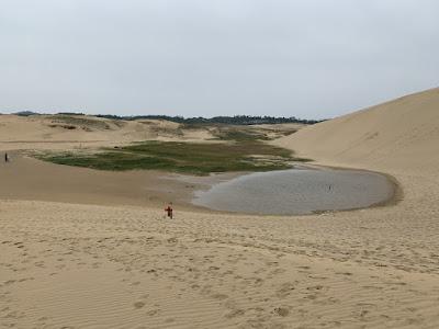 鳥取砂丘のオアシス