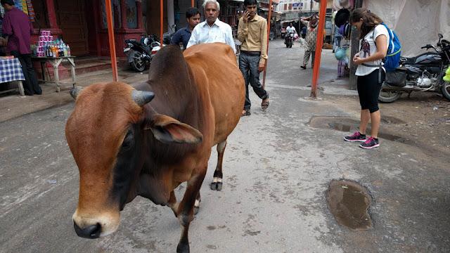 Brahma Pushkar