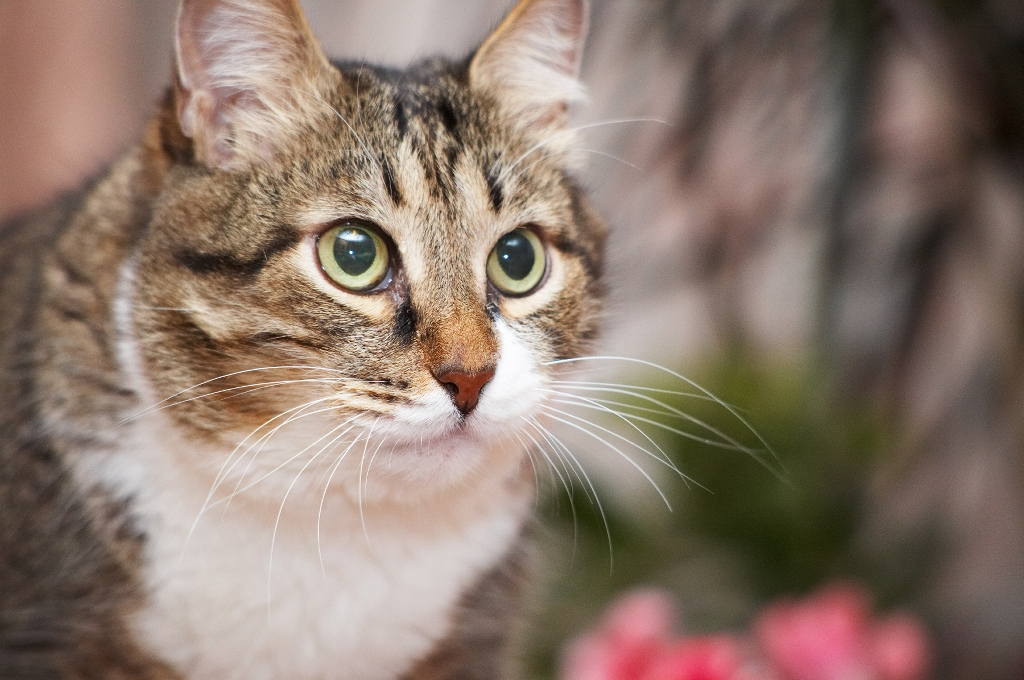 Luxating Patella In House Cats
